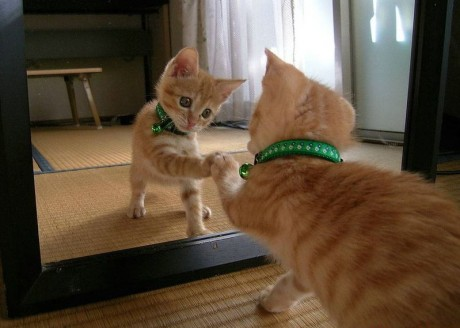 What Effect Do Mirrors Have On Animals?